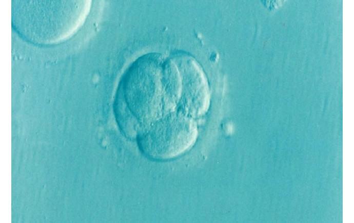 Le FERTIMIEL et l'infertilité !